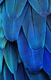 Macaw Feathers (Blue)