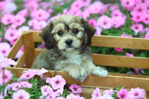 Fluffy Puppy in Crate with Flowers