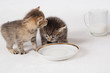 Kittens drinking milk from a saucer and a glass mug
