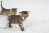 Two kittens, one of which mews next to the glass cup poster
