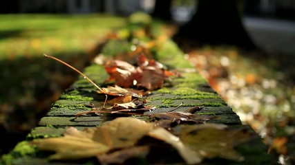 Autumn in ta park