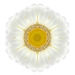 Daisy Mandala Flower Kaleidoscopic Isolated on White