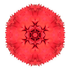 Red Carnation Mandala Flower Kaleidoscopic Isolated on White