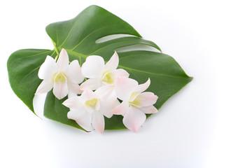 モンステラの葉と蘭の花