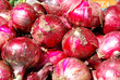 Red onions from Tropea - Calabria