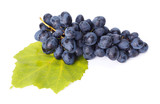 Single blue grape cluster on leaf