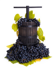 Traditional manual grape pressing utensil with blue grapes