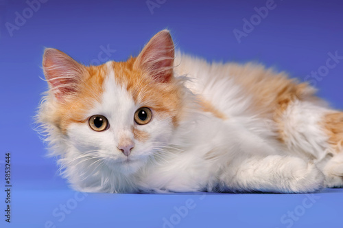 Kitten on a colored background