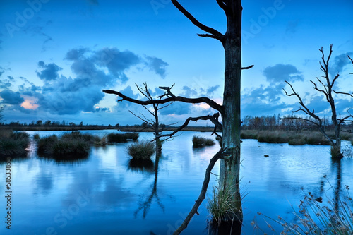 old dead trees in bog during dusk