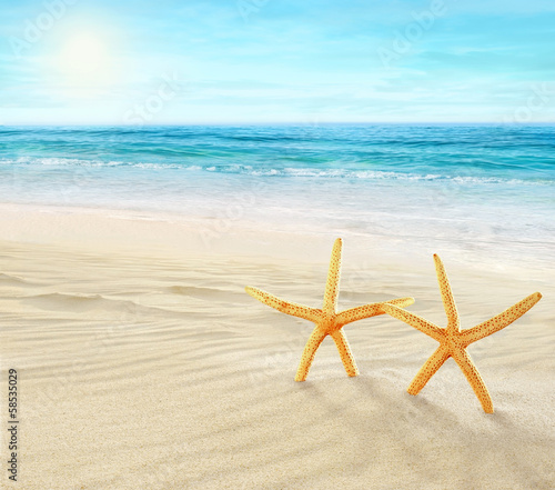 Two starfishes on the Beach