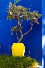 pot jaune sur fond bleu