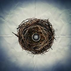 compass nest paper backdrop