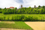 Vineyards in French Burgundy
