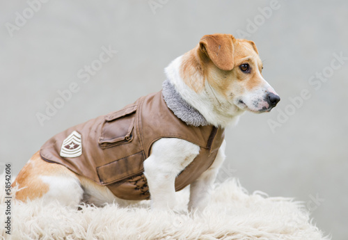 Foto op Canvas Dragen Dog in brown leather jacket sitting