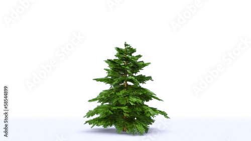 Growing Christmas tree with toys and gift boxes