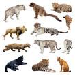 Set of  wildcats