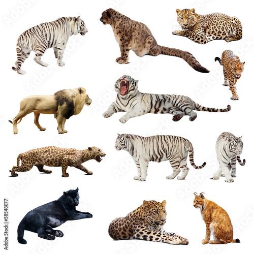 Fotobehang Luipaard Set of wildcats