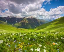 Les champs de fleurs dans les montagnes. Géorgie, Svanétie.