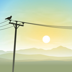 Bird on Telephone Lines