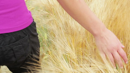 Woman walking and touching the golden wheat with her hand