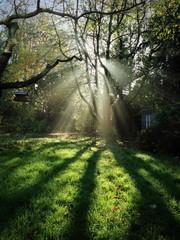 Morning sun beam