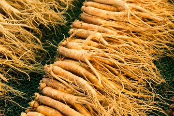 Fresh ginseng in Korean market