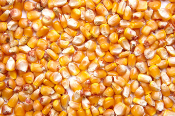 corn seeds as a background