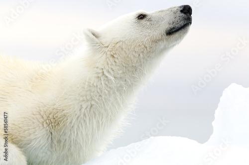 Foto op Canvas Antarctica 2 Svalbard