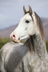 Nice arabian stallion with long mane in autumn