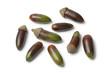 Fresh Moroccan acorns