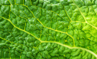Savoy Cabbage Leaf Texture Macro Background