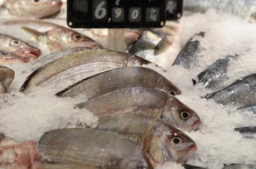 rayon de poissons