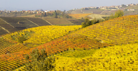 Monferrato vineyards in autumn panorama color image