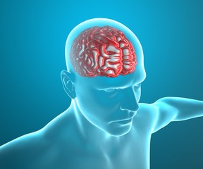 Cervello corpo umano anatomia ai raggi x