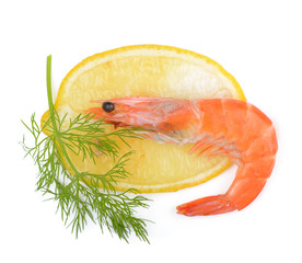 shrimp, a lemon, fennel on a white background