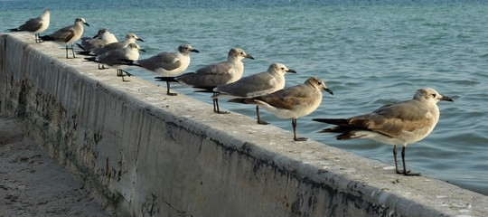 Seegulls lined up