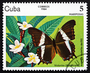 Postage stamp Cuba 1984 Victorina, Butterfly