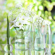 Plants in various glass containers on natural background