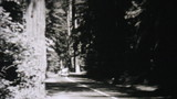 Cars Driving Through Redwood Forest-1940 Vintage 8mm film