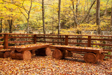 Autumn leaves on wooden benches