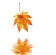 Orange maple leaf reflected in water.