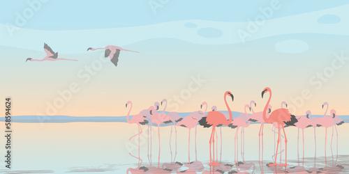 Pink Flamingos © Kitigan