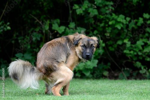In de dag Hond Hund macht