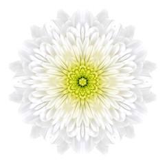 White Concentric ChrysanthemumMandala Flower Isolated on Plain