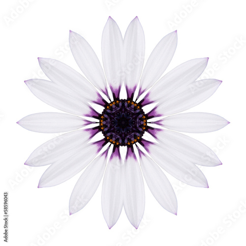 White Concentric Mandala Flower Isolated on Plain