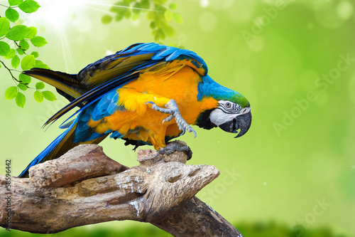 natural green background with Parrot Macaw