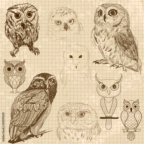 Set of retro owl sketches