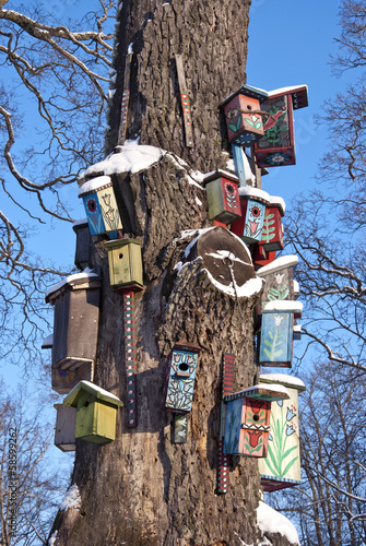 various  bird nest boxes houses on old  tree trunk in park