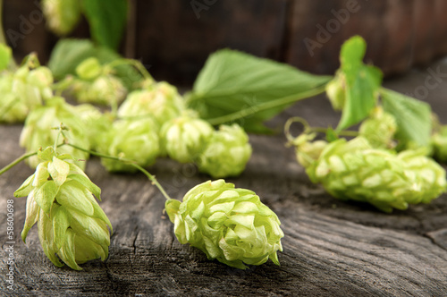 Hops lying on the beer barrel oak