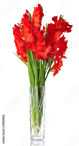 Beautiful red gladiolus in vase